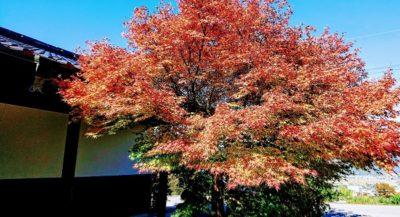 秋晴れの信州です。