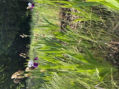 花が散ったころの草取り