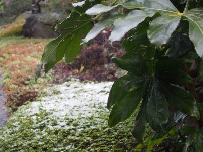 雪になりました。