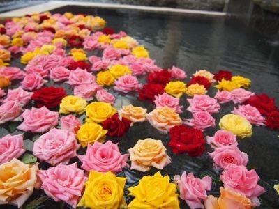 本日の薔薇風呂(1階女性露天風呂)