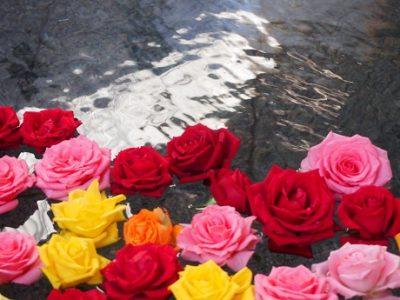 薔薇の入荷がございましたので。。。